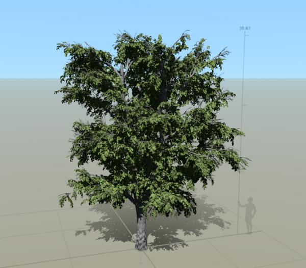 05speedtree